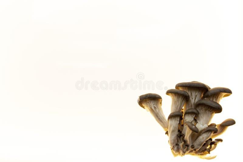 Hintergrund für Pilzdiätpilzmenü-Pilzflieger Hintergrund für pilzartige Apotheken lizenzfreies stockbild