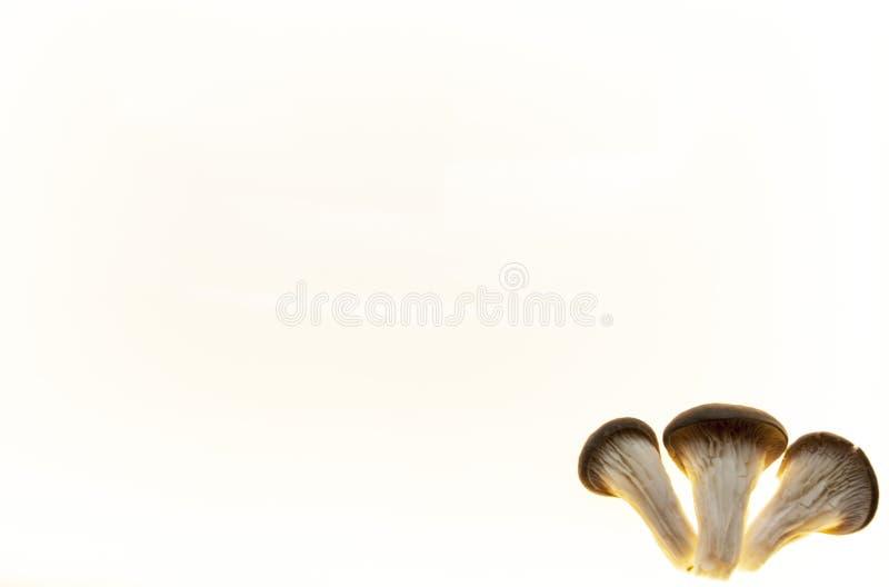 Hintergrund für Pilzdiätpilzmenü-Pilzflieger Hintergrund für pilzartige Apotheken stockfoto