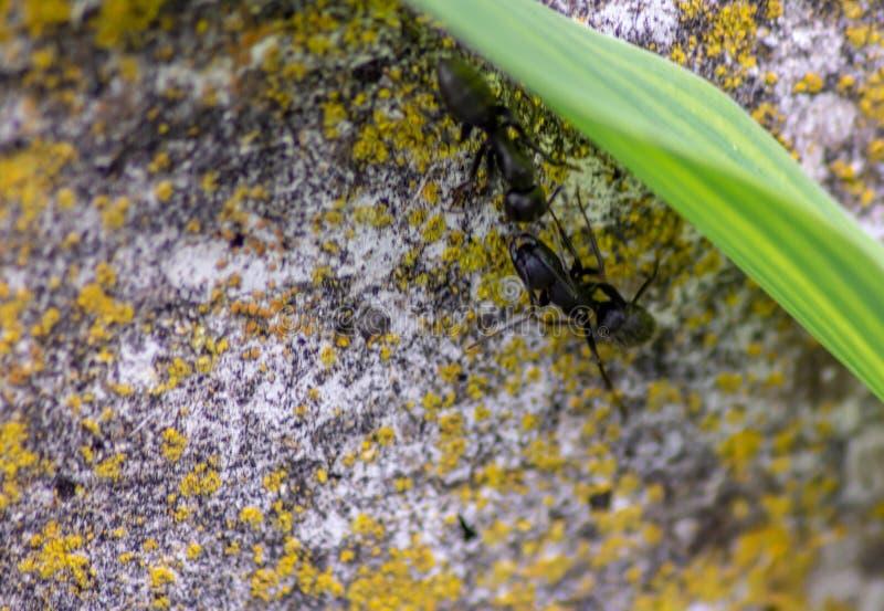 Hintergrund Fotografie der Wand mit dem Blatt und Ameisen, die mit einander mit Antennen sich verständigen lizenzfreie stockfotografie