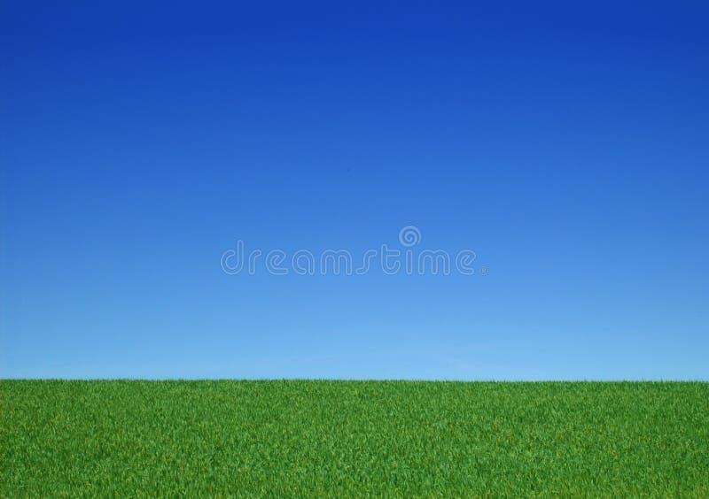 Hintergrund - frei - Wiese mit blauem Himmel lizenzfreies stockfoto