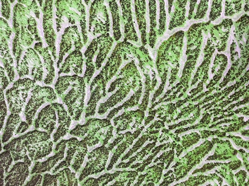 Hintergrund-Grün- und weißefarbe der abstrakten Kunst stockfoto