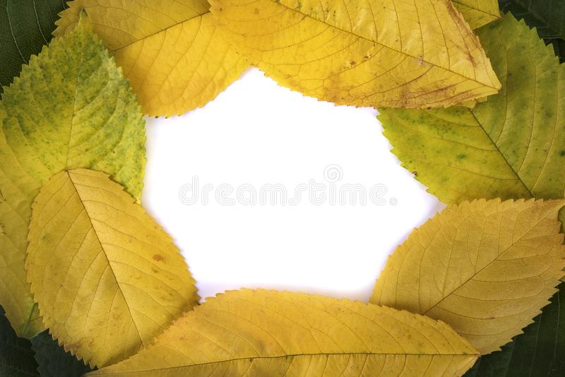 Hintergrund-Kopienraum des Fotoherbstblattrahmens weißer lizenzfreies stockbild