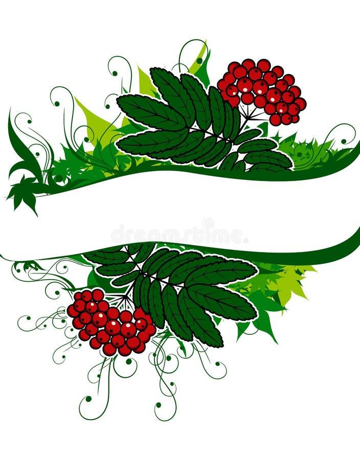 Hintergrund mit ashberry und Exemplarplatz vektor abbildung