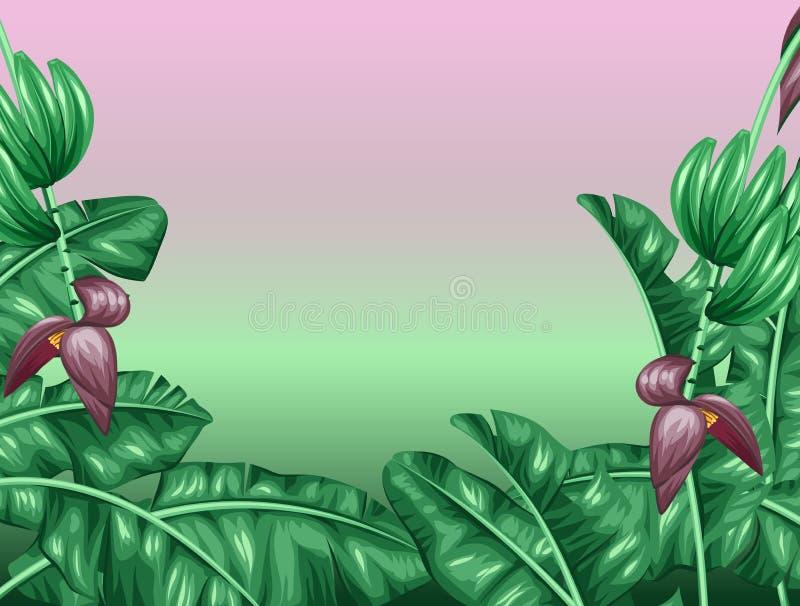Hintergrund mit Bananenblättern Dekoratives Bild des tropischen Laubs, der Blumen und der Früchte Design für die Werbung von Bros stock abbildung