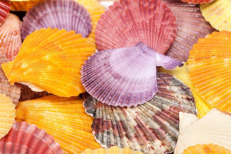 Hintergrund mit bunten Seeoberteilen von Mollusken, Abschluss oben stockbild