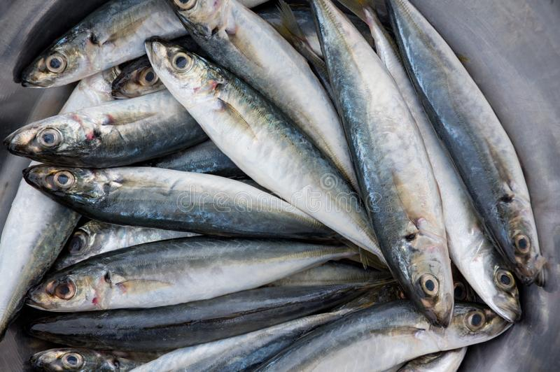 Hintergrund mit den Fischen, die in Südostasien verkaufen, vermarkten Teil 5 lizenzfreies stockfoto