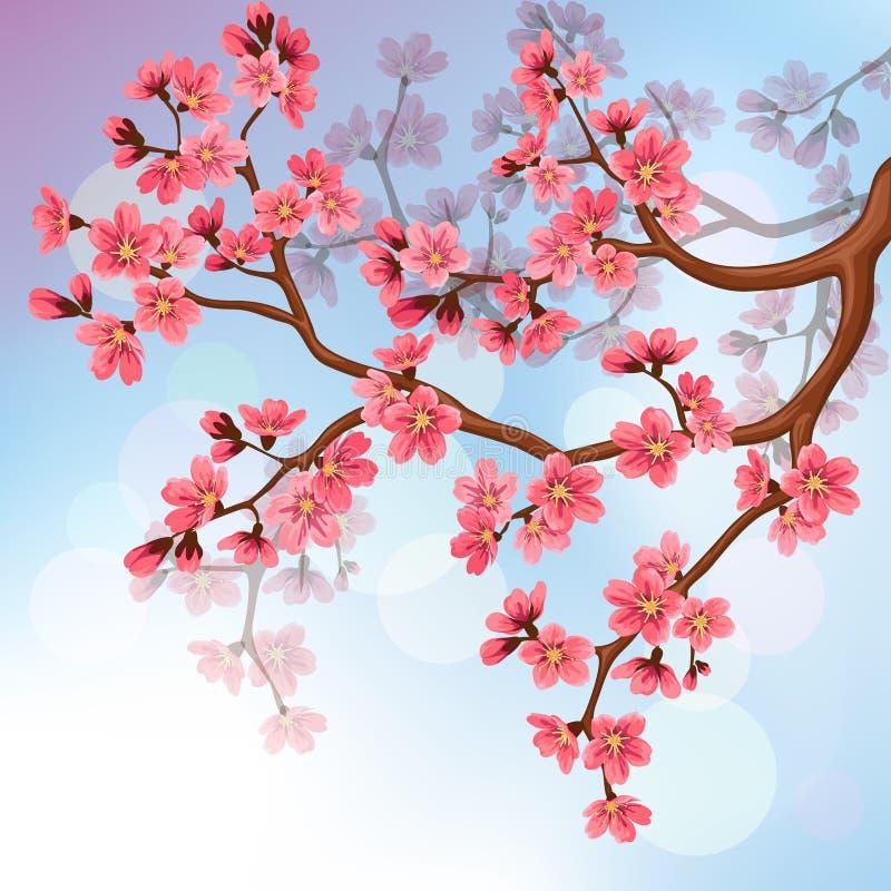 Hintergrund mit Kirschblüte-Blüten lizenzfreie abbildung