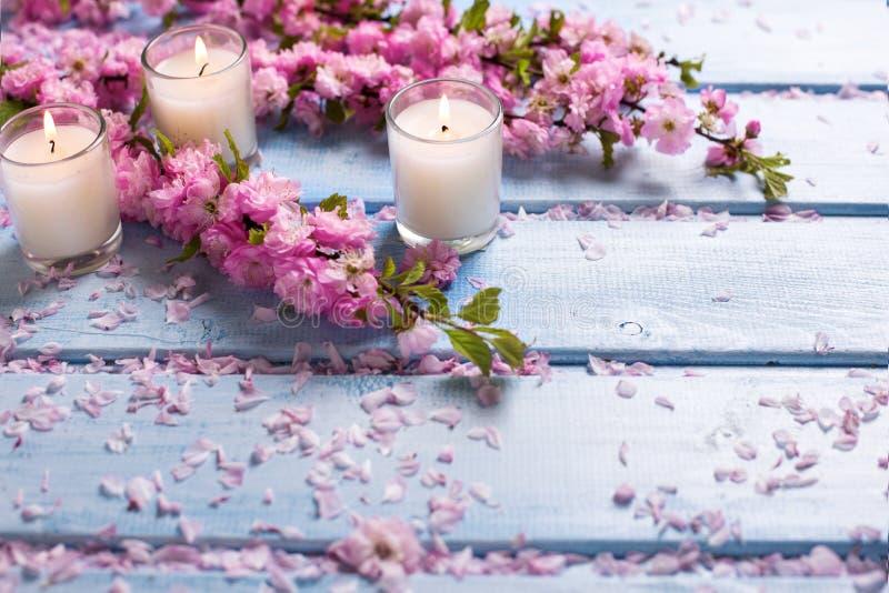 Hintergrund mit Kirschblüte-Rosa blüht und Kerzen auf blauem woode stockfoto