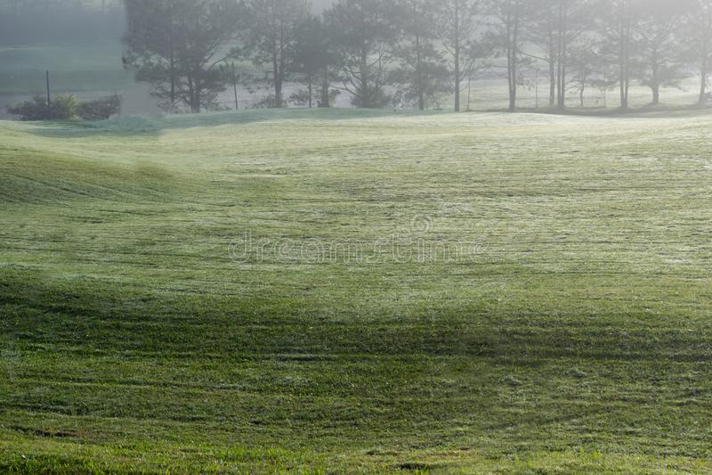 Hintergrund mit schöner grüner Wiese und gelbem Sonnenlicht, Nebelabdeckungsgrashügelteil 5 stockfoto
