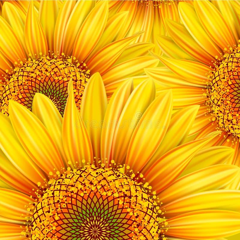 Hintergrund mit Sonnenblumen vektor abbildung