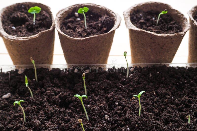 Hintergrund mit Torftöpfen und dem Boden Frühlingspflanzarbeit stockfotos