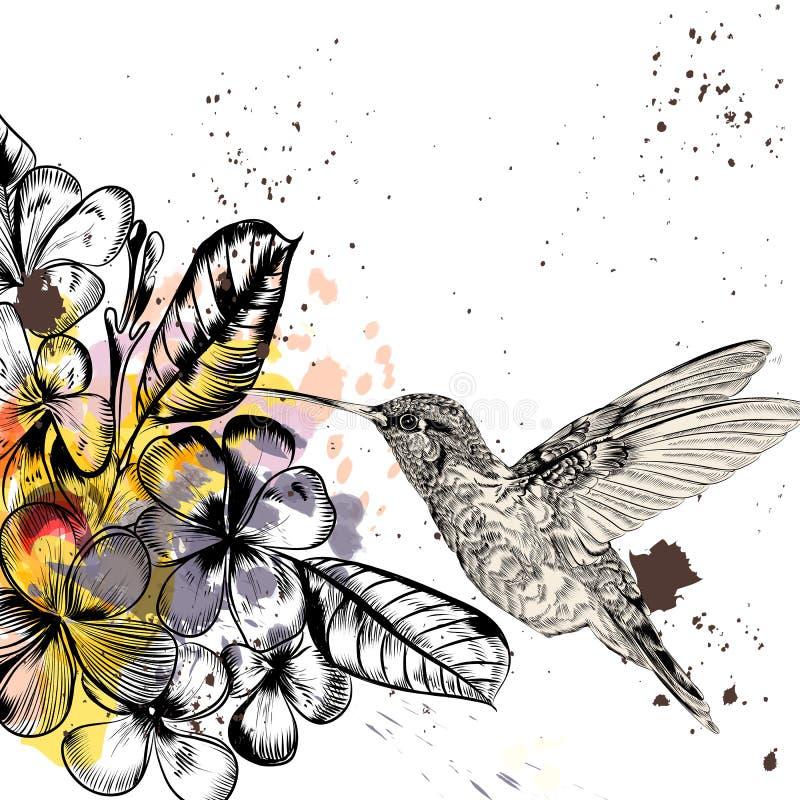 Hintergrund mit tropischen Blumen und Kolibri vektor abbildung
