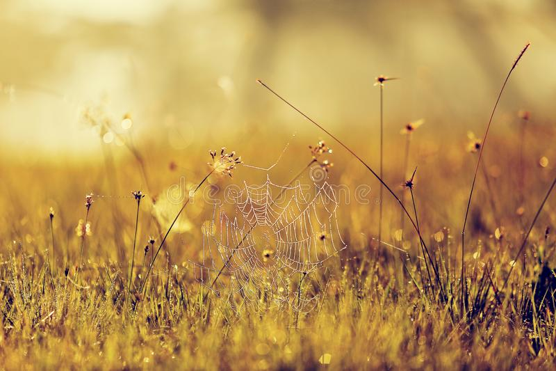 Hintergrund mit Unkräutern und Magie des Lichtes an der Dämmerung im Herbst lizenzfreies stockbild