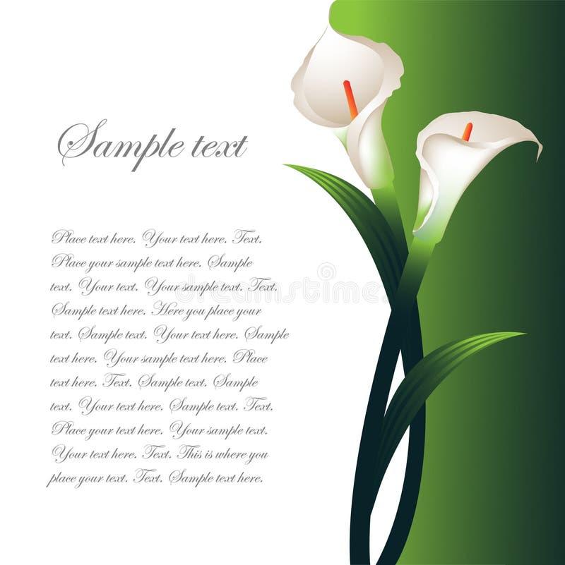 Hintergrund mit weißen Callas stock abbildung