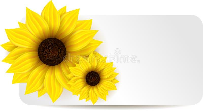 Hintergrund mit zwei Sonnenblumen stock abbildung