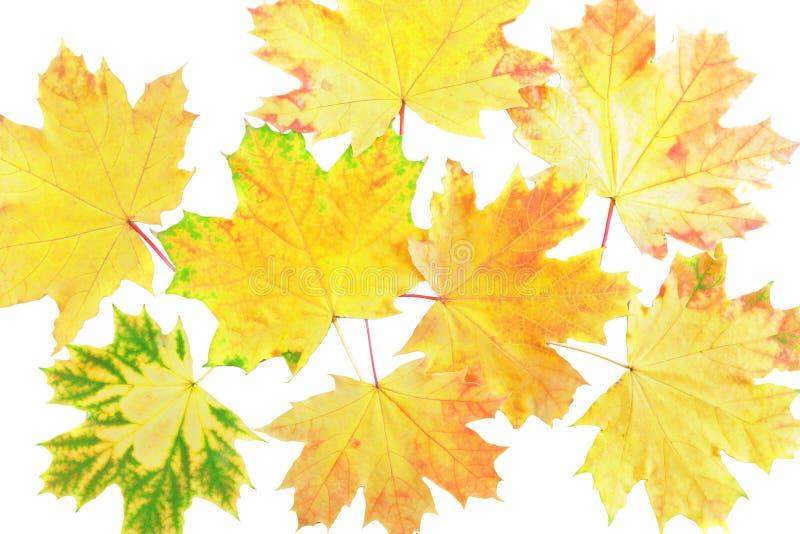 Hintergrund, Tapete-perfektes Herbstblatt. stockbild