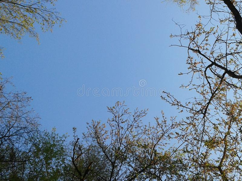 Hintergrund von Bäumen stockfotografie