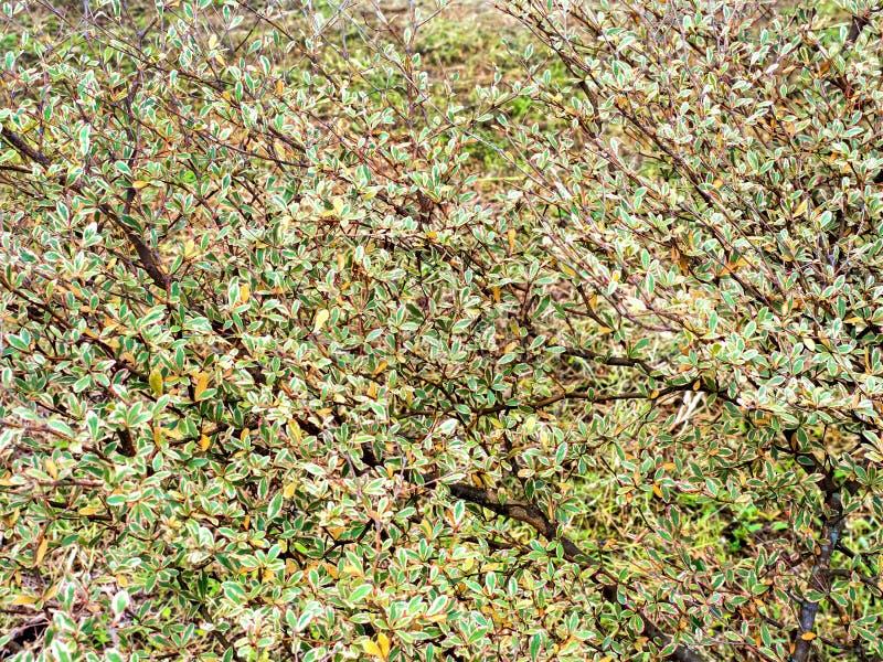 Hintergrund von Blättern, der schöne 03 ist lizenzfreies stockfoto