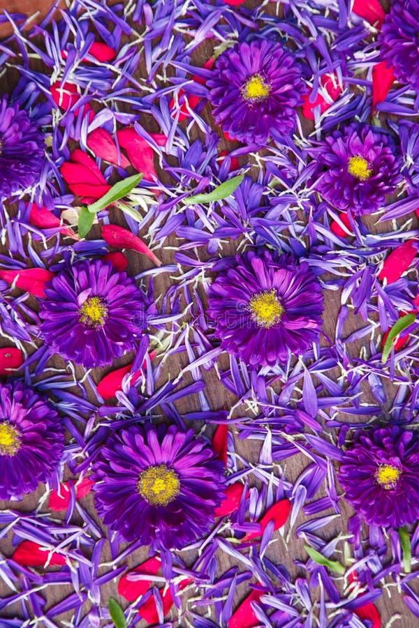 Hintergrund von blauen und roten Blumen lizenzfreie stockfotos