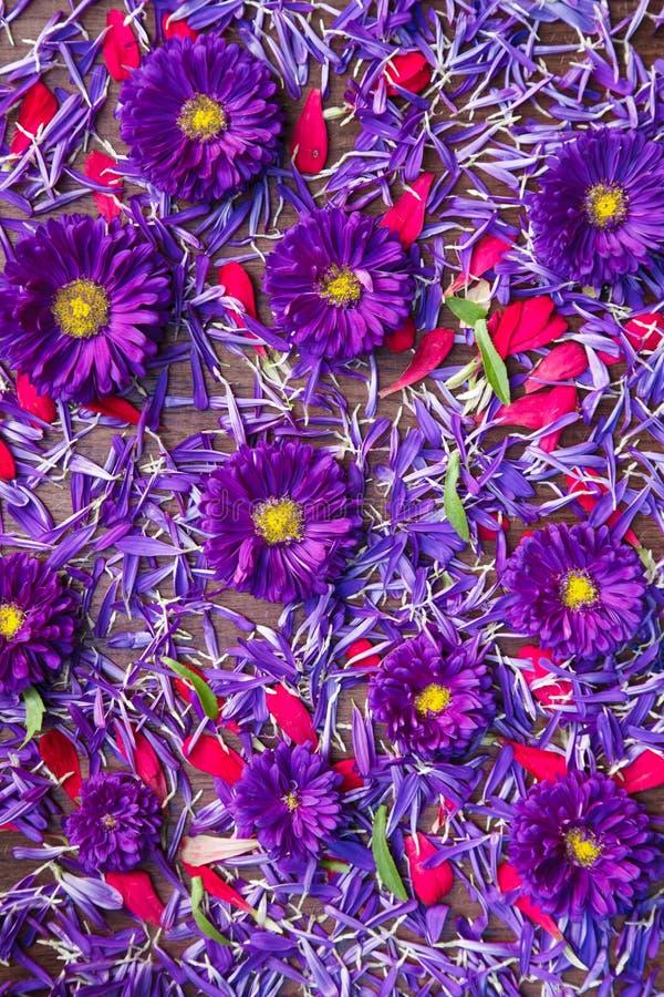 Hintergrund von blauen und roten Blumen lizenzfreies stockbild