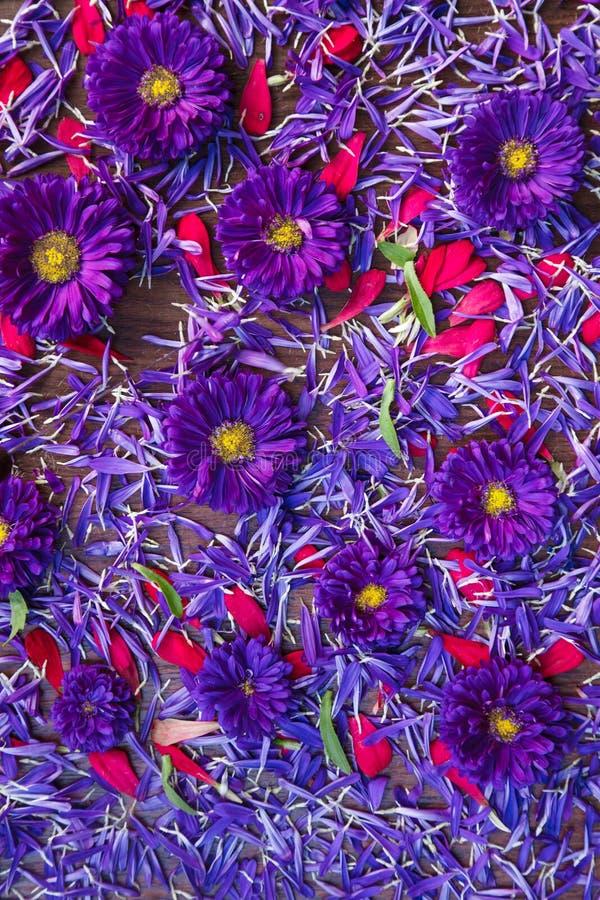 Hintergrund von blauen und roten Blumen lizenzfreies stockfoto