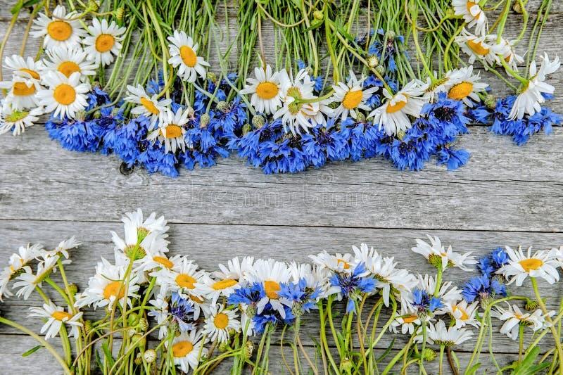 Hintergrund von Blumensträußen von schönen wilden Blumen von Gänseblümchen und von Kornblumen auf dem Hintergrund des alten hölze stockfotos