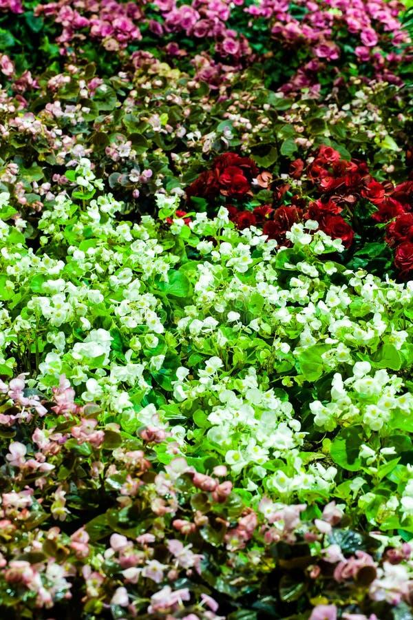 Hintergrund von bunten Zierpflanzen mit Licht von der Lampe lizenzfreies stockbild