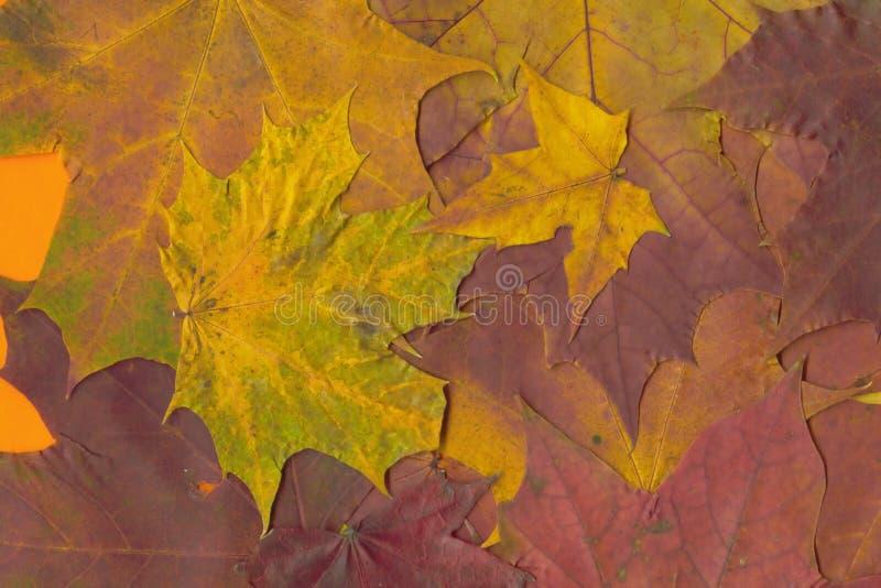 Hintergrund von den Blättern stock abbildung