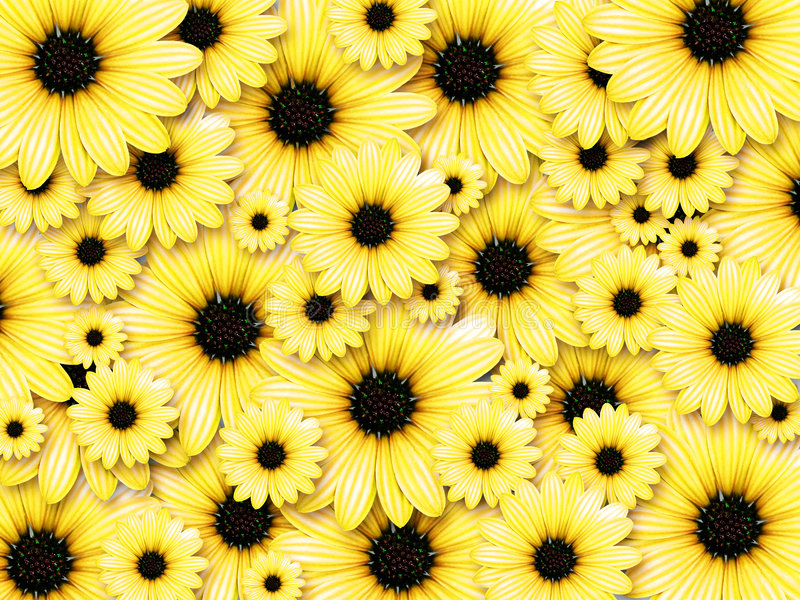 Hintergrund von den gelben Blumen stockfotografie