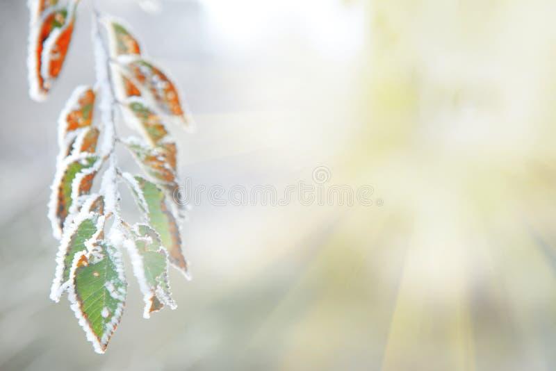 Hintergrund von gefrorenen Blättern unter dem Frost und der Sonne stockbild