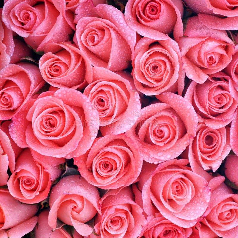 hintergrund von rosa rosen stockfoto bild von abschlu 37511258. Black Bedroom Furniture Sets. Home Design Ideas