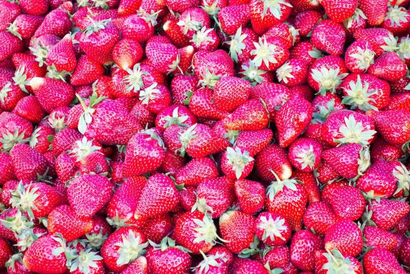 Hintergrund von saftigen Erdbeeren lizenzfreies stockfoto