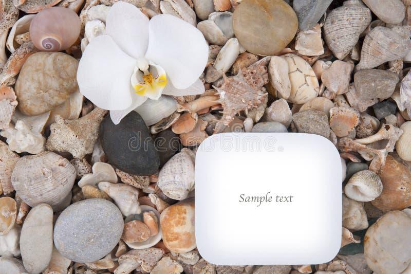 Hintergrund von Seeoberteilen und -steinen mit Raum für Text lizenzfreies stockfoto