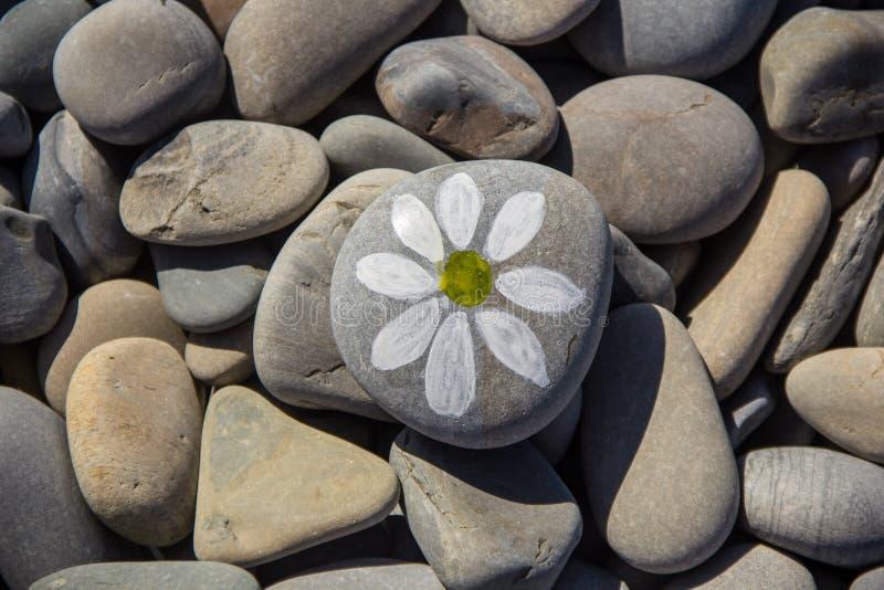 Hintergrund von Seesteinen Kiesel einer mit gezogener Kamille stockfotos