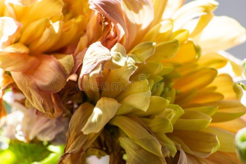 Hintergrund von verwelkten gelben Blumen im hellen Sonnenlicht stockbild