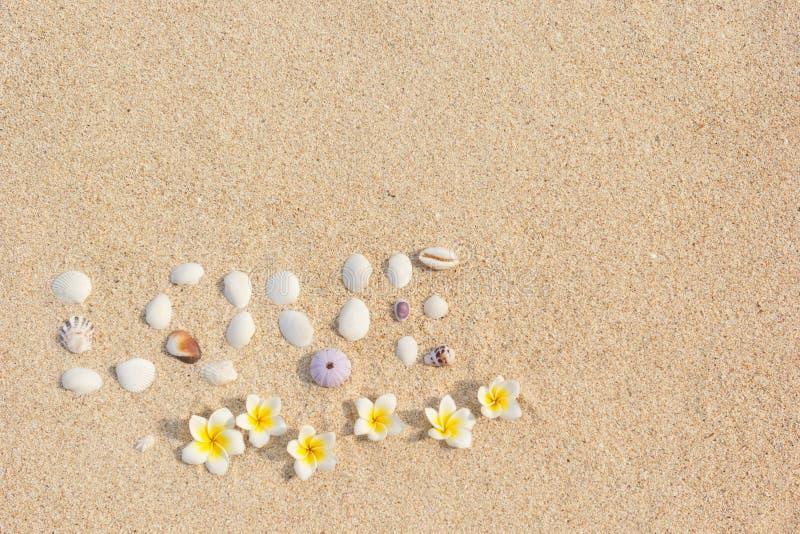 Hintergrundaufschrift-Liebesmuscheln auf versanden mit Blumen Plumeria Frangipani lizenzfreie stockfotografie
