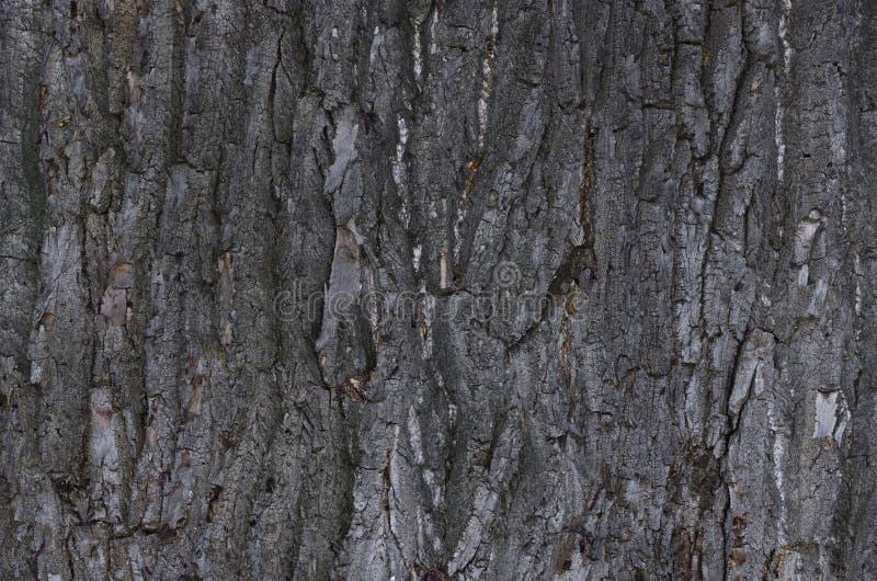 Hintergrundbarkenbaum lizenzfreie stockfotos