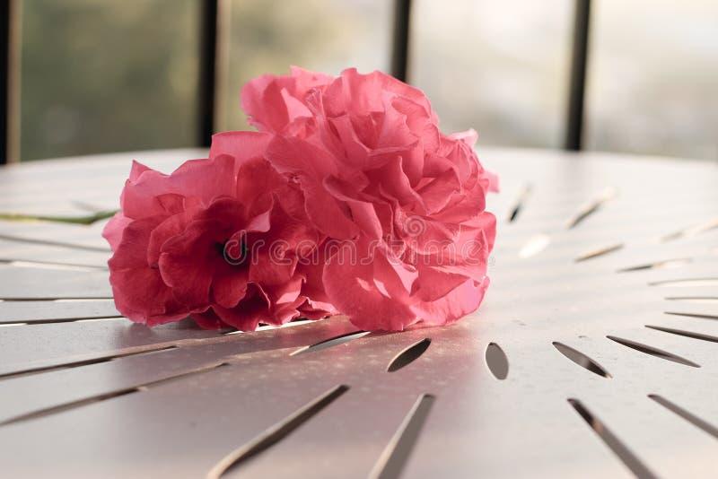 Hintergrundbeleuchtet von Rose auf dem Tisch stockfotos