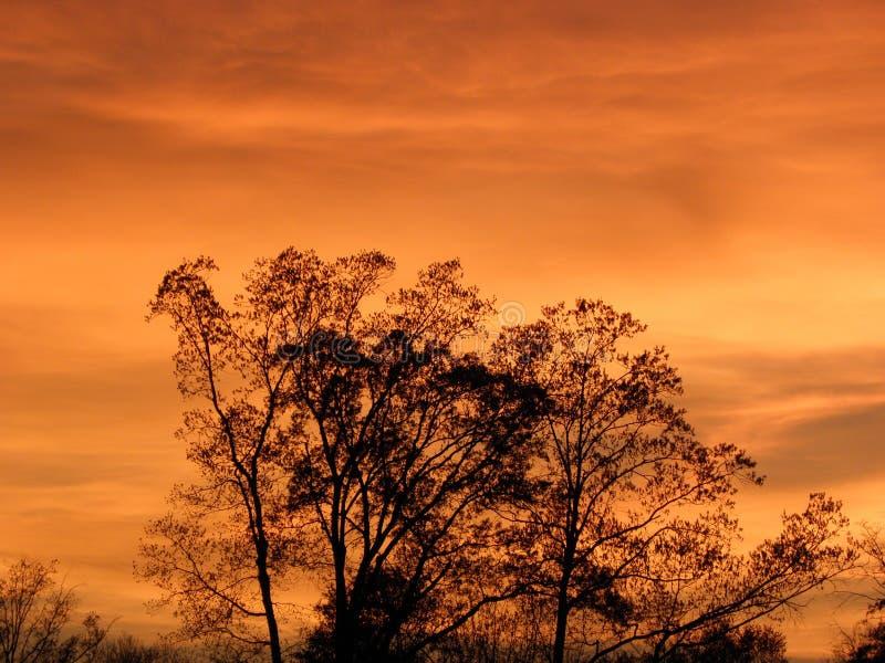 Hintergrundbeleuchtete Bäume gegen orange Sonnenuntergang stockbild