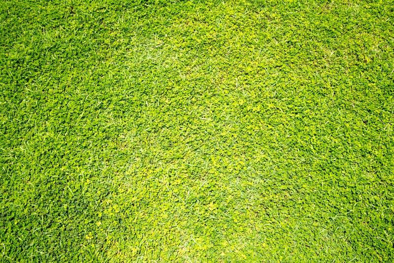 Hintergrundbeschaffenheit des grünen Grases stockfoto