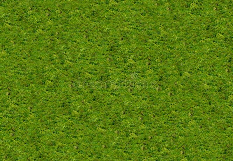 Hintergrundbeschaffenheit des Naturholzes mit Grün verlässt natürlich lizenzfreies stockbild