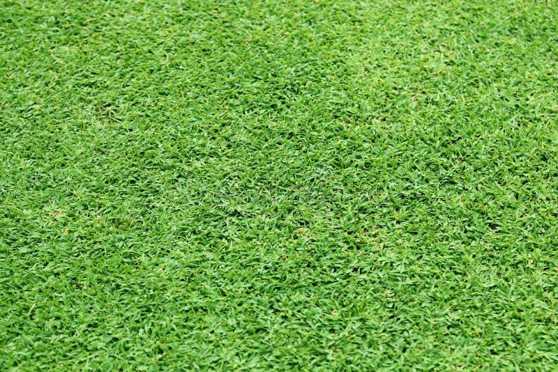 Hintergrundgrün-Rasenmuster des grünen Grases maserte Hintergrund stockbilder