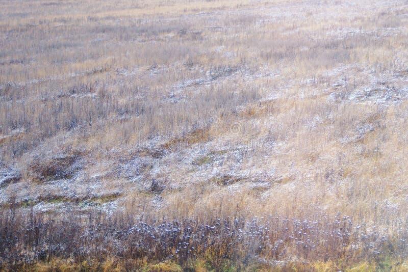 Hintergrundherbst natürlich, getrocknetes Gras, bedeckt mit es auf dem Gebiet lizenzfreie stockbilder