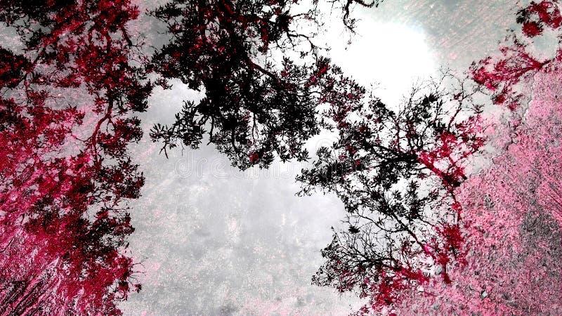 Hintergrundreflexionswald vom Wasser auf dem Boden lizenzfreies stockbild