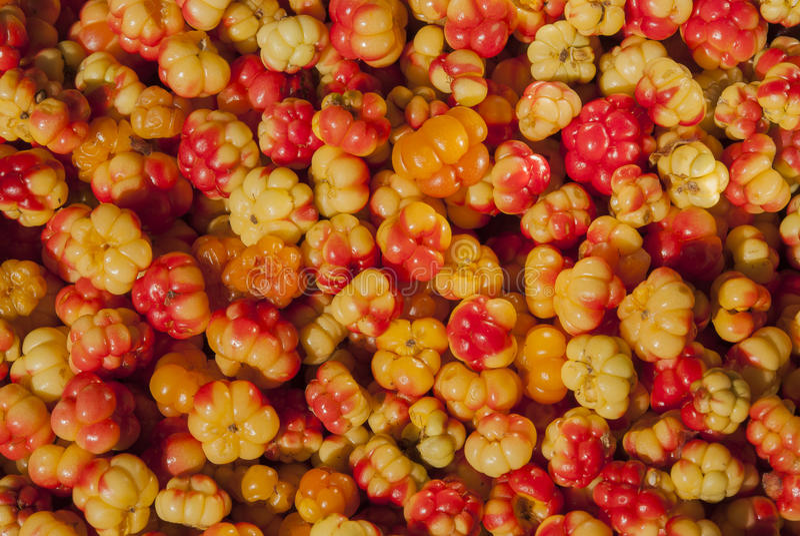 Download Hintergrundschellbeeren Im Makro Stockbild - Bild von organisch, sommer: 96927697
