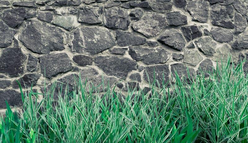 Hintergrundsteinwand, Beschaffenheit des hellen Ziegelsteines mit Anlagen des Grases und Blumen stockfoto