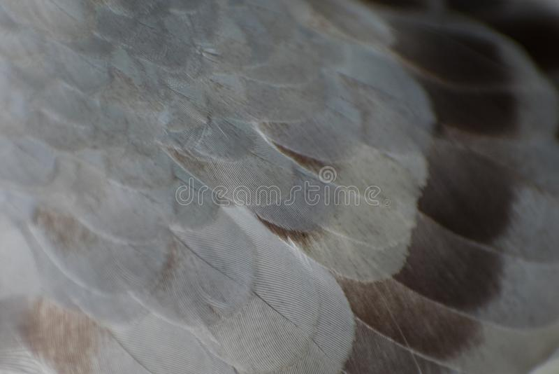Hintergrundtaubenfedermuster-Braunfarbe stockfotos