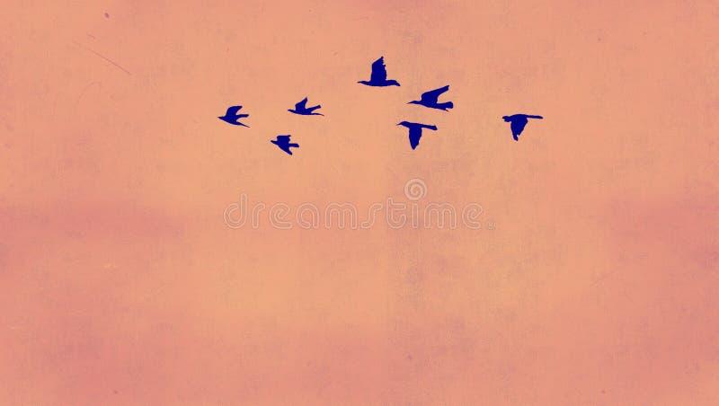 Hintergrundvogel stockfoto