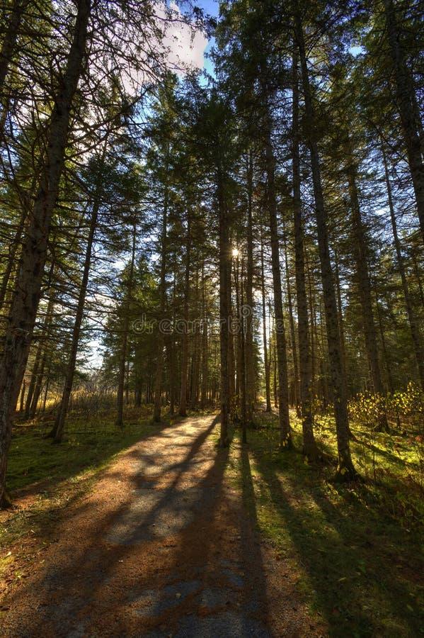Hinterhintergrundbeleuchteter Baum HDRs Sussex beschattet Blätter stockbilder