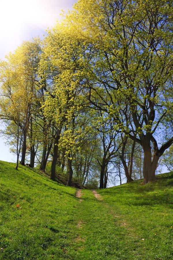 Hinterim Frühjahr Park lizenzfreie stockfotografie